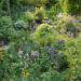 Vortrag Naturnahe Gartengestaltung